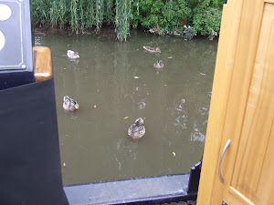 Ducks at Alrewas