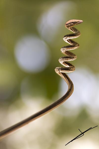 Serpiente palo, edición de photoshop