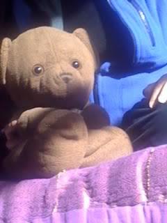 Bruno el oso