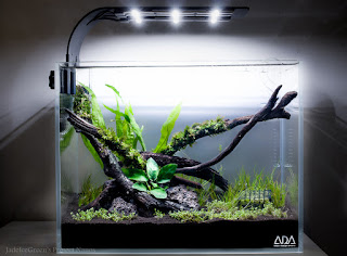 aquarium, waterfalls, ponds, aquascape, water features, aquascaping, aquarium plants, water gardens, takashi amano, watergardens, aquarium supplies, garden water features, water feature, aquarium design,