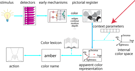 a cognitive model for color perception