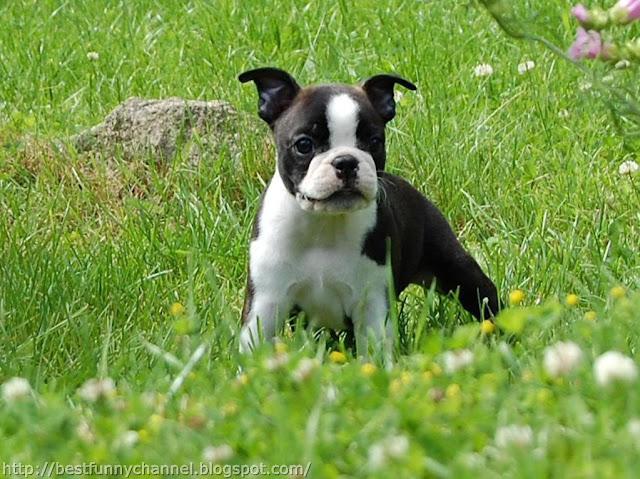 Puppy on grass.