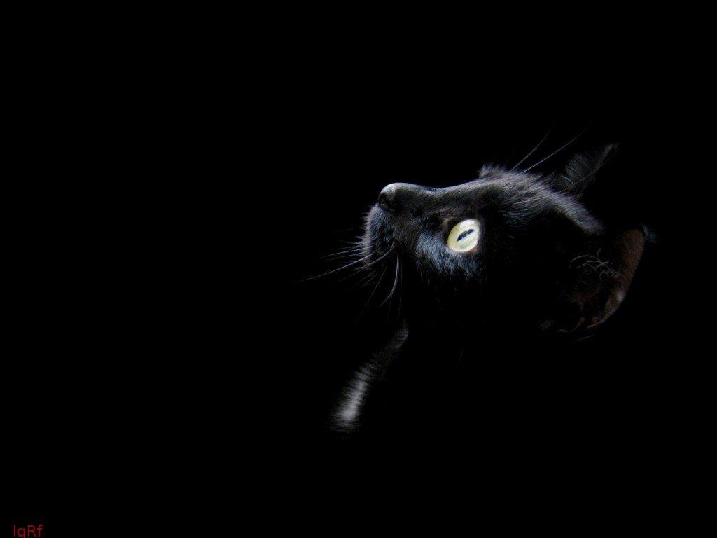 Si Las   Brujas   Estaban Rodeadas De Distintos Animales   Porqu