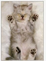 Cute Cats & Kittens Gift Ideas