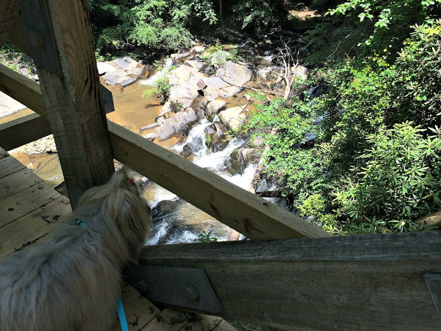 looking over the bridge at Tumbling Waters Trail at Tails Creek