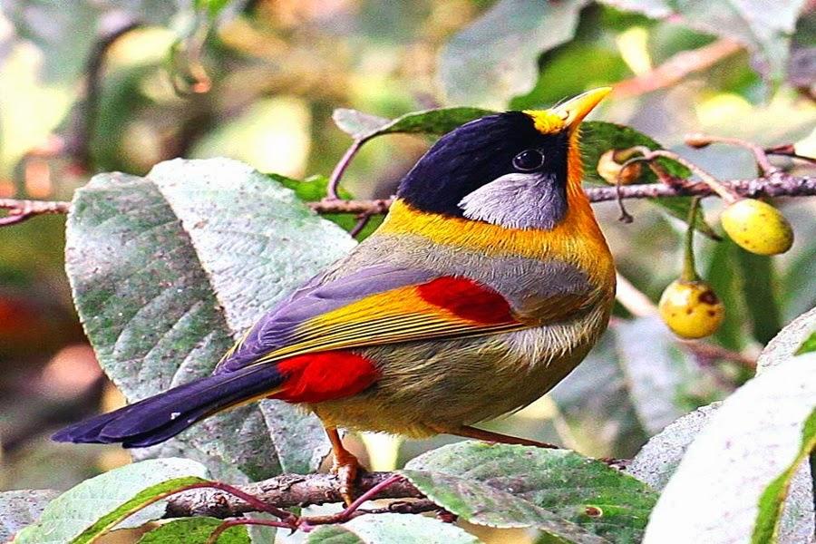 Pássaro lindo