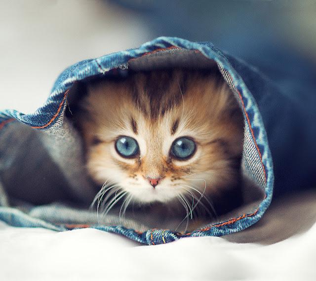 Cute Kitty photos