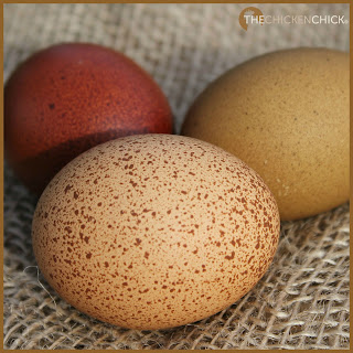 The wrong feed, too many snacks/treats, overcrowding, mixing commercial layer feed with scratch/cracked corn/oats, etc.  & being physically prevented from getting to the feeders by another flock member can all lead to nutritional deficiencies, which can result in a drop in egg production.