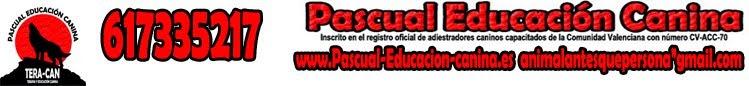 Pascual Educación y Adiestramiento Canino en Alicante