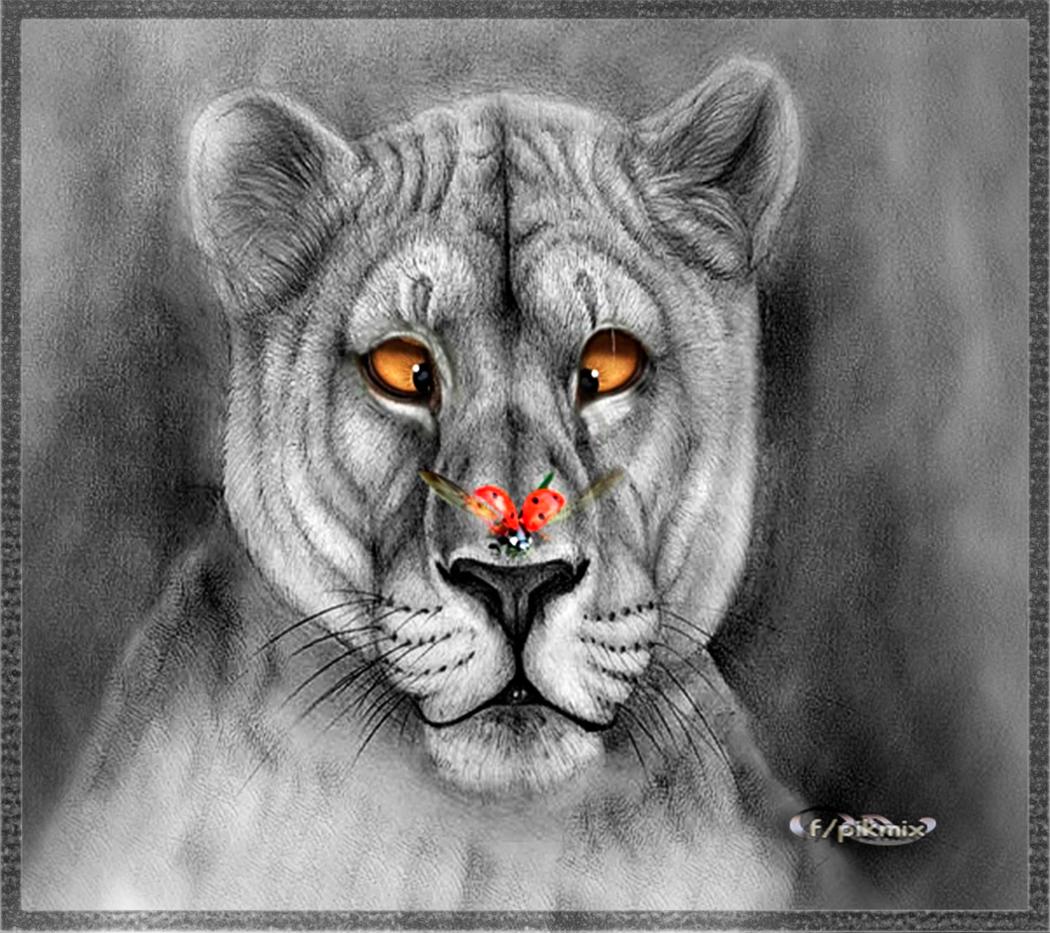 Asombrado - Fondo de pantalla -dibujo, felinos, naturaleza