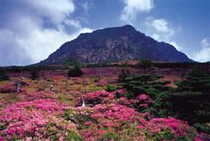 Gunung+Hallasan,+Korea+Selatan 5 Gunung Api Spektakuler yang Wajib Dikunjungi