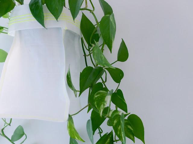 Ikea Sprutt, Växt