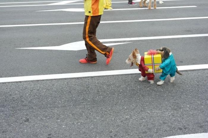 cachorro fantasiado carregando caixa engracado