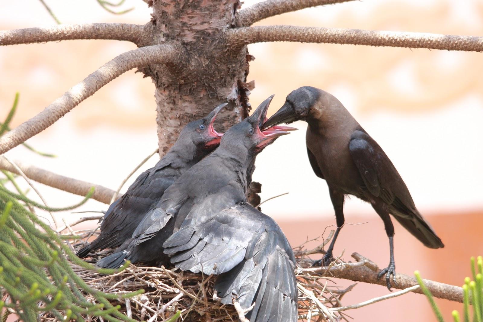 கண்ணு பட போகுதய்யா..! House+crow