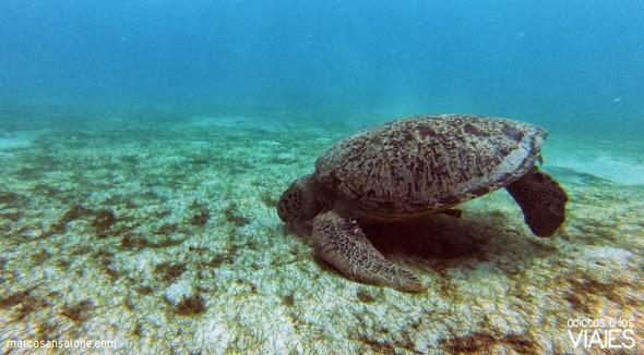tortuga marina en Perhentian Kecil malasia
