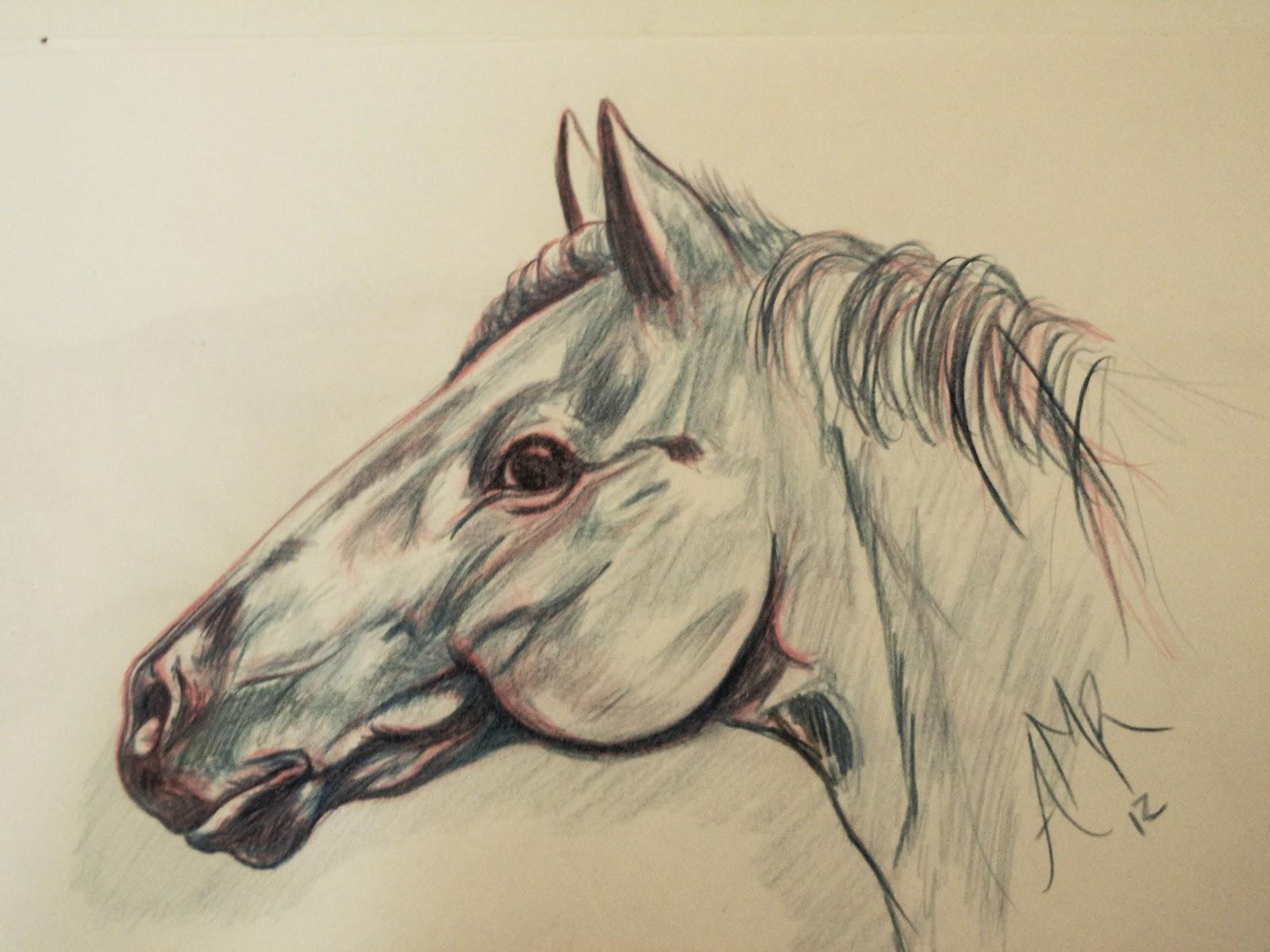 DESIGN ART dibujo cabeza de caballo en lapiz de color