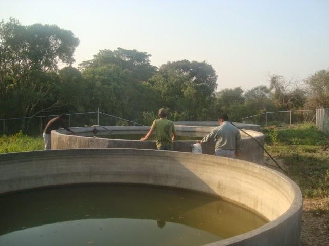 Construcci n de obras para el aprovechamiento del agua for Estanque de concreto