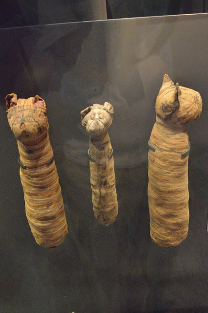 Mummified cats