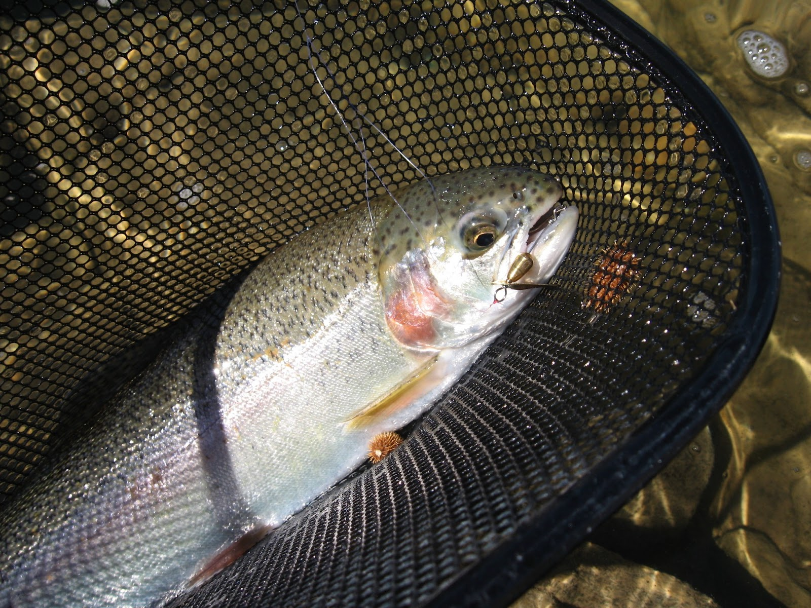 Outdoors Nm Some Tips For Spring Fishing On New Mexico 39 S