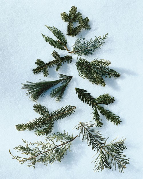 Pines And Needles Blog Do You Know Your Types Of