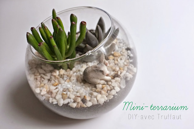 julie adore diy mini terrarium. Black Bedroom Furniture Sets. Home Design Ideas