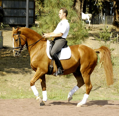 Olympic Equestrian Dressage Tickets: Classical Dressage