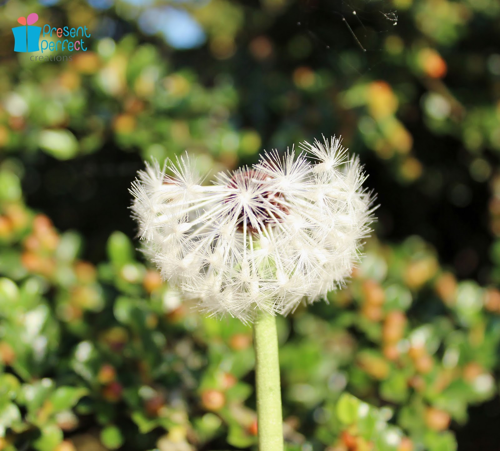 Present perfect creations dandelion to make this silk flower requires a lot of manual dexterity a bit of knowledge about dandelions but above all a serious amount of patience mightylinksfo