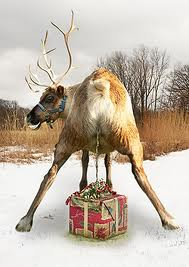 Image result for reindeer piss