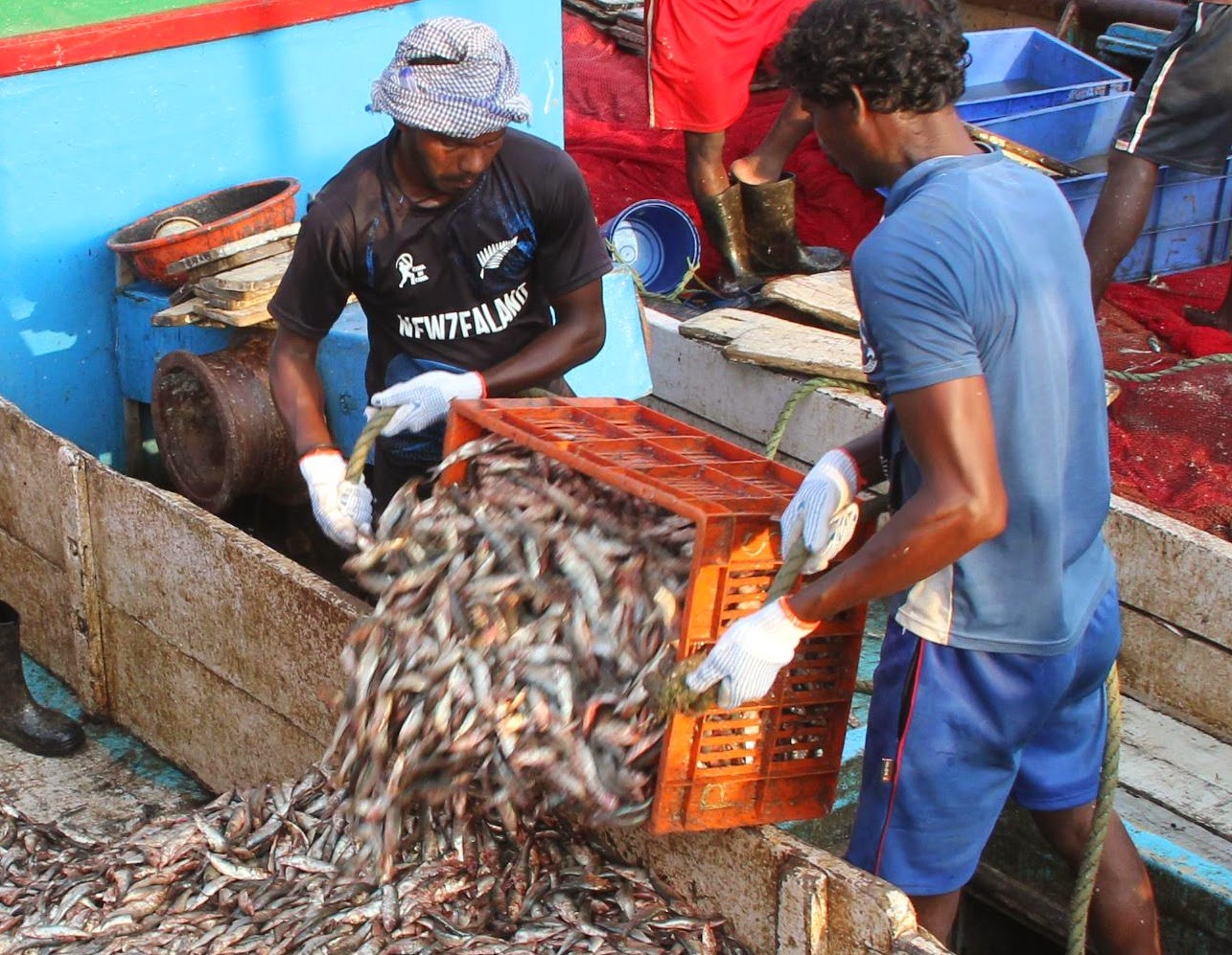 http://www.thenational.ae/uae/environment/fish-prices-on-the-rise-as-bad-weather-hampers-uae-fishermen