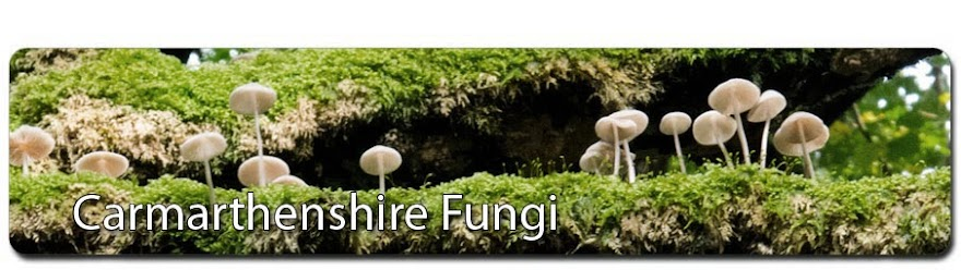 Carmarthenshire Fungi