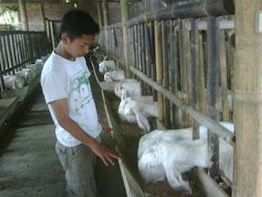 Kandang Etawa Farm