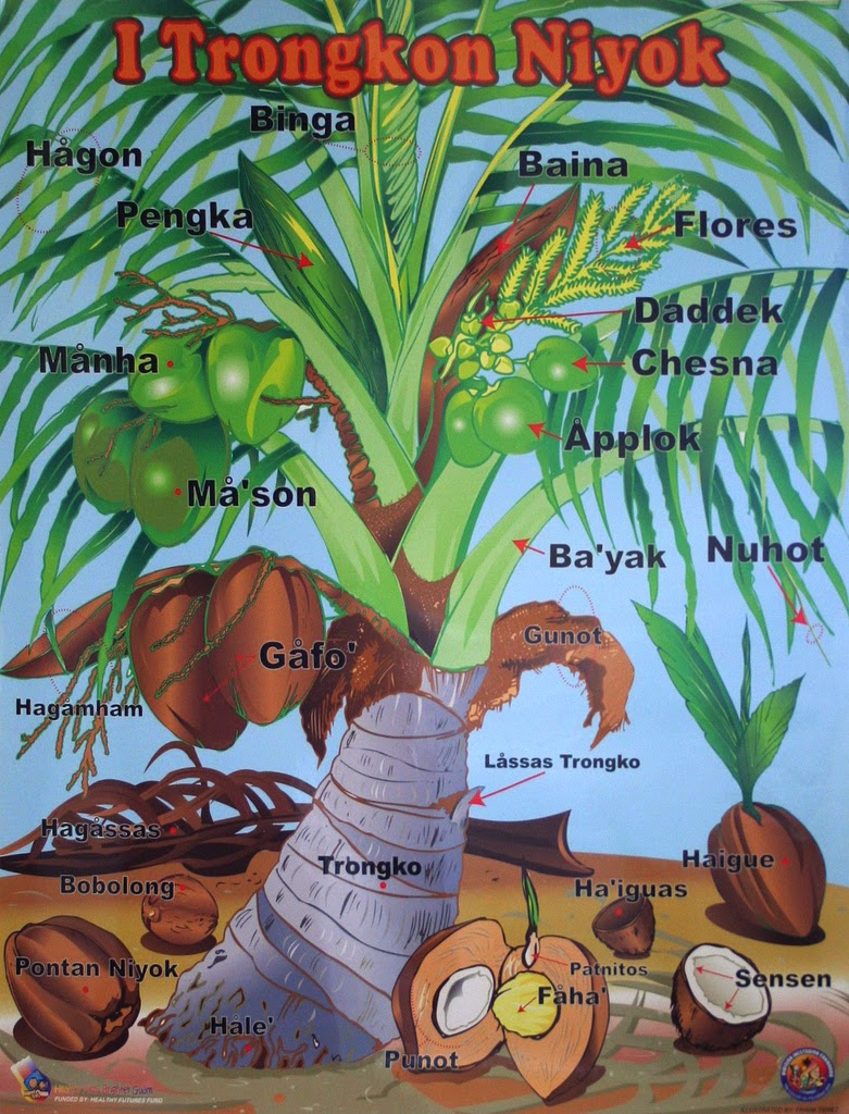 legend of the coconut tree All the maui legends crammed into moana's you're welcome  sprouted a tree , now we've got coconuts the origin of the coconut first off.