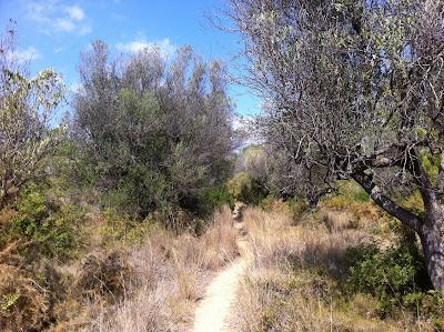 IMG 3353 Calpe und seine Natur   Calpe y su naturaleza