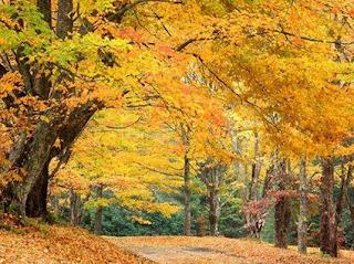 Окружающий мир, осень