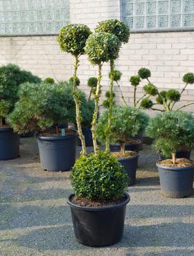 By vero plantes pour terrasses for Plante exterieur pour terrasse