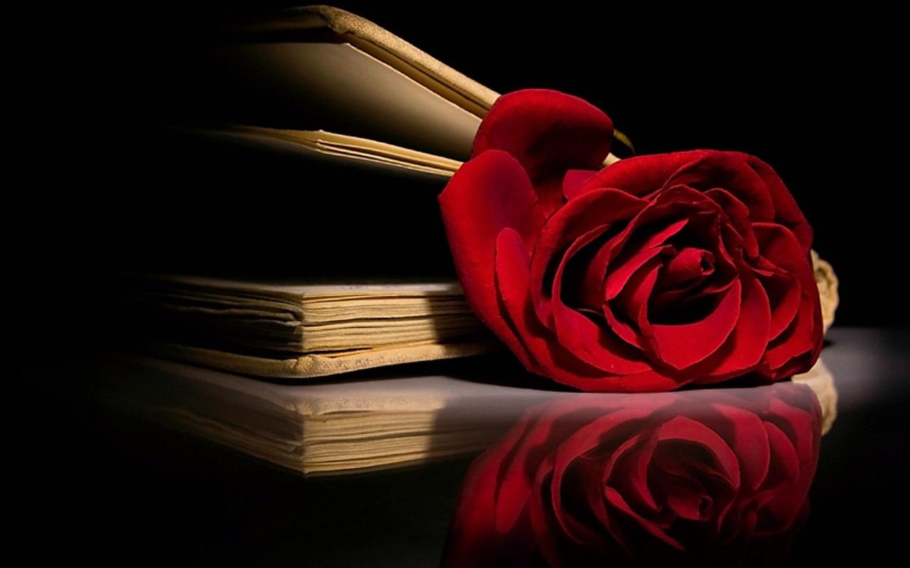 http://4.bp.blogspot.com/-dgIhdeQHEFI/UO6_bMRUJ6I/AAAAAAAABvg/9wg7wKEi1WU/s1600/red+rose+gift+on+valentines+day+%286%29.jpg