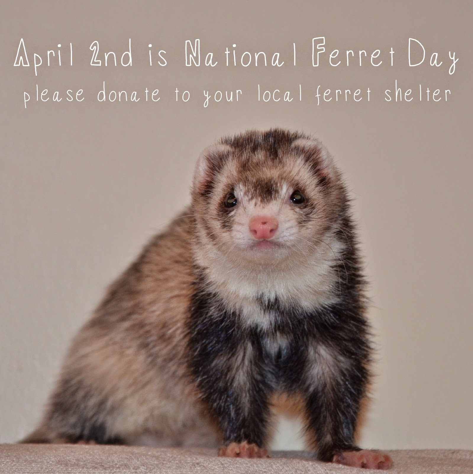 Happy National Ferret Day