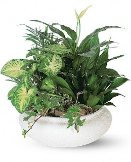 Order a Dish Garden For Mother's Day