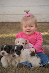 Click the PHOTO to See Our Puppies For Sale