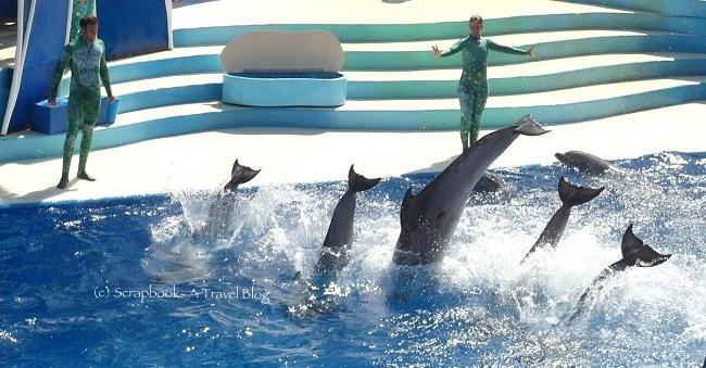 San Diego Sea World Dolphin Show Blue Horisons