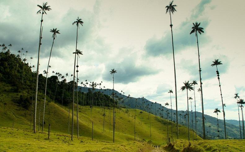 Valle de Cocora: El valle de las palmas que llegan al cielo