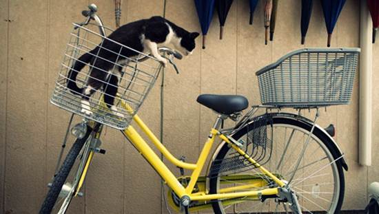 kucing-naik-basikal