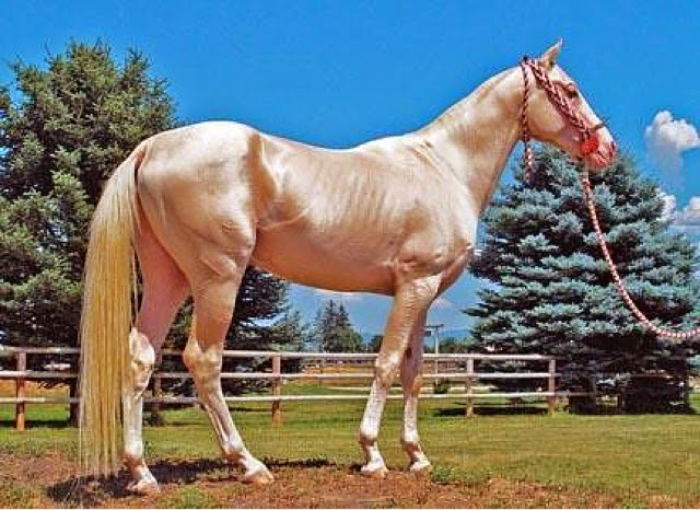Elena's Blog : Most Beautiful Horse in the World