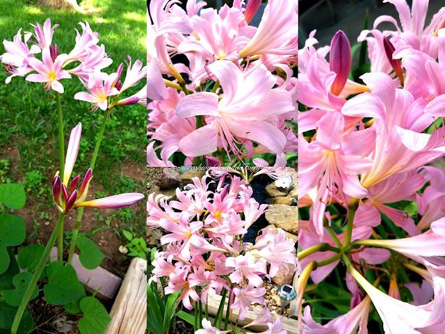 Beautiful Flowers in my Garden