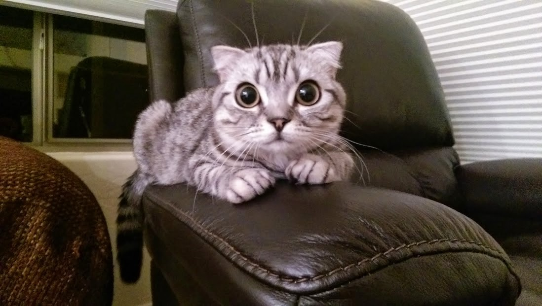 Funny cats - part 122 (40 pics + 10 gifs), cat picture, funny cat