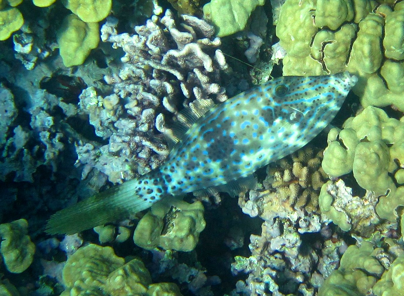 a study of race by jeffrey m fish Jeffrey m leis and mark i mccormick  ferences in study species, coral reef fish  research can  would swim the 100-m race in 36 seconds the olympic.