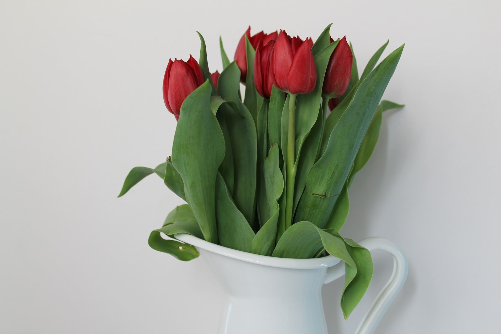 Rote Tulpen in weisser Milchkanne
