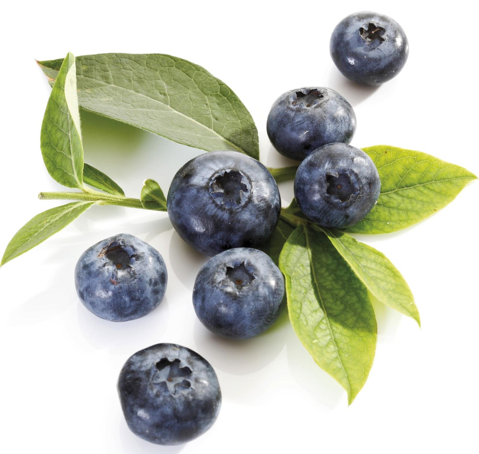 Blueberry Fruit Maine Wild Blueberries