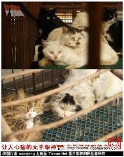 Gatos Cozidos Vivos Um Prato Popular Na China...