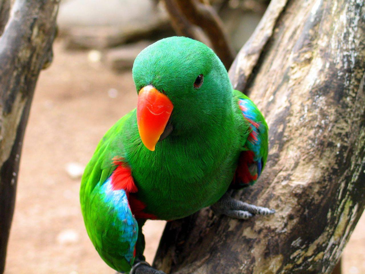 Beautiful parrotcolorful parrotparrot kissing girl full hd beautiful parrotcolorful parrotparrot kissing girl full hd wallpapers 1080p free download voltagebd Images